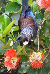 Tui in the gardens